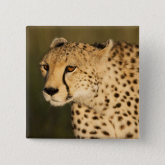 Cheetah, Acinonyx jubatus, in the Masai Mara 2 15 Cm Square Badge