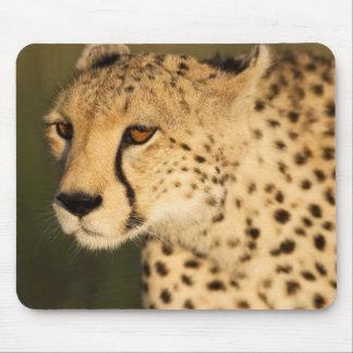 Cheetah, Acinonyx jubatus, in the Masai Mara 2 Mouse Pad