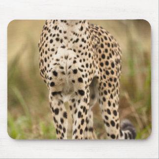 Cheetah, Acinonyx jubatus, in the Masai Mara Mouse Mat