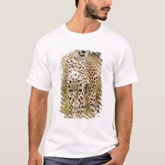 Cheetah, Acinonyx jubatus, in the Masai Mara T-Shirt
