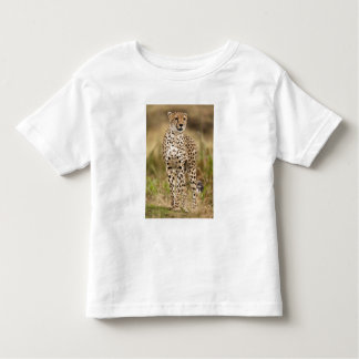 Cheetah, Acinonyx jubatus, in the Masai Mara Toddler T-Shirt