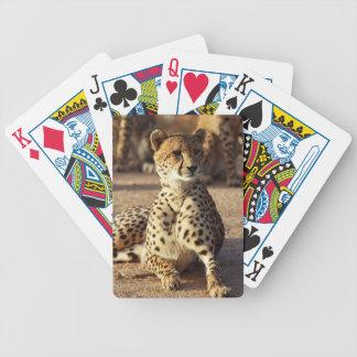 Cheetah (Acinonyx Jubatus), Kruger Natl. Park Bicycle Playing Cards