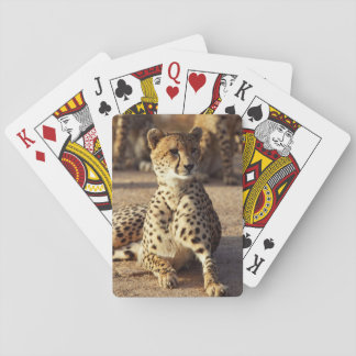 Cheetah (Acinonyx Jubatus), Kruger Natl. Park Card Deck