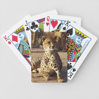 Cheetah (Acinonyx Jubatus), Kruger Natl. Park Card Decks