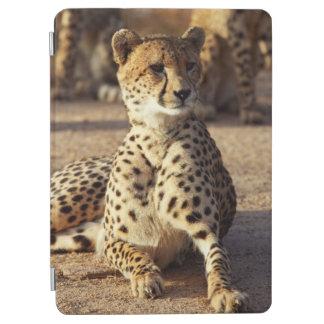 Cheetah (Acinonyx Jubatus), Kruger Natl. Park iPad Air Cover