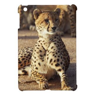 Cheetah (Acinonyx Jubatus), Kruger Natl. Park iPad Mini Cases