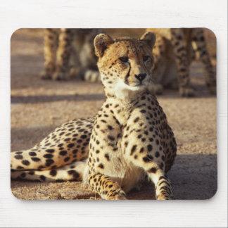 Cheetah (Acinonyx Jubatus), Kruger Natl. Park Mouse Mat
