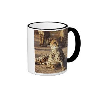 Cheetah (Acinonyx Jubatus), Kruger Natl. Park Mugs