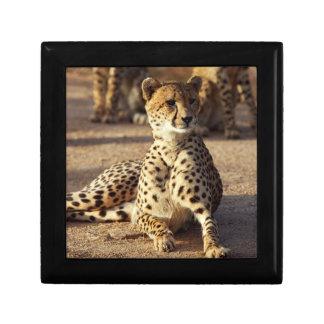 Cheetah (Acinonyx Jubatus), Kruger Natl. Park Small Square Gift Box