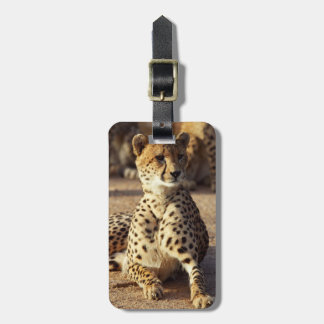 Cheetah (Acinonyx Jubatus), Kruger Natl. Park Tags For Luggage