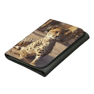 Cheetah (Acinonyx Jubatus), Kruger Natl. Park Wallets