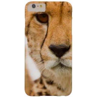 Cheetah (Acinonyx Jubatus) Mother And Cub Barely There iPhone 6 Plus Case