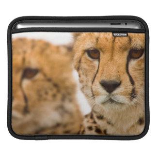 Cheetah (Acinonyx Jubatus) Mother And Cub iPad Sleeve
