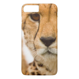 Cheetah (Acinonyx Jubatus) Mother And Cub iPhone 8 Plus/7 Plus Case