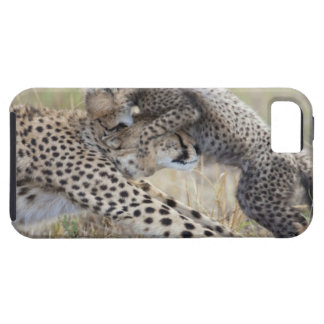 Cheetah (Acinonyx jubatus) mother playing with iPhone 5 Case