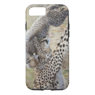 Cheetah (Acinonyx jubatus) mother playing with iPhone 8/7 Case