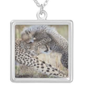 Cheetah (Acinonyx jubatus) mother playing with Silver Plated Necklace