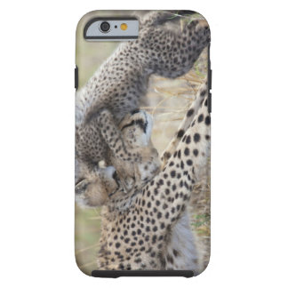 Cheetah (Acinonyx jubatus) mother playing with Tough iPhone 6 Case