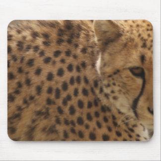 Cheetah (Acinonyx jubatus) Mouse Pad