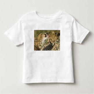 Cheetah, Acinonyx jubatus, mutual grooming in Toddler T-Shirt