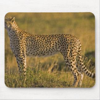 Cheetah Acinonyx jubatus on plain Masai Mouse Pad