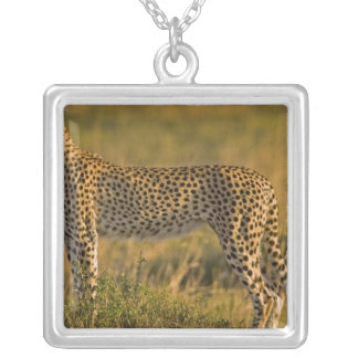 Cheetah Acinonyx jubatus) on plain, Masai Silver Plated Necklace