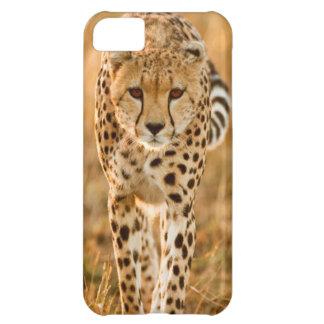 Cheetah (Acinonyx Jubatus) Portrait, Maasai iPhone 5C Case