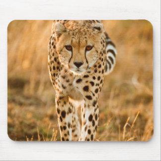 Cheetah (Acinonyx Jubatus) Portrait, Maasai Mouse Pad