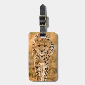 Cheetah (Acinonyx Jubatus) Portrait, Maasai Tag For Bags
