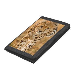 Cheetah (Acinonyx Jubatus) Portrait, Maasai Trifold Wallets