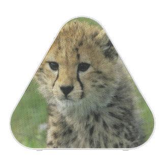 Cheetah, (Acinonyx jubatus), Tanzania, Serengeti