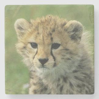 Cheetah, (Acinonyx jubatus), Tanzania, Serengeti Stone Beverage Coaster