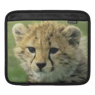 Cheetah, (Acinonyx jubatus), Tanzania, Serengeti iPad Sleeve