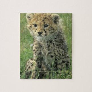 Cheetah, (Acinonyx jubatus), Tanzania, Serengeti Jigsaw Puzzles