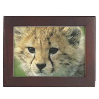 Cheetah, (Acinonyx jubatus), Tanzania, Serengeti Keepsake Box