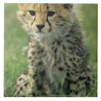 Cheetah, (Acinonyx jubatus), Tanzania, Serengeti Large Square Tile