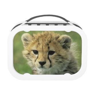 Cheetah, (Acinonyx jubatus), Tanzania, Serengeti Lunch Box