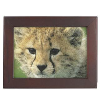 Cheetah, (Acinonyx jubatus), Tanzania, Serengeti Memory Box