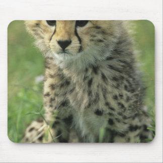 Cheetah Acinonyx jubatus Tanzania Serengeti Mouse Pad