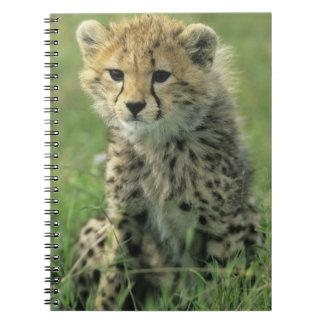 Cheetah, (Acinonyx jubatus), Tanzania, Serengeti Spiral Notebooks