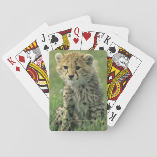 Cheetah Acinonyx jubatus Tanzania Serengeti Deck Of Cards