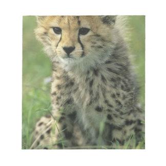 Cheetah, (Acinonyx jubatus), Tanzania, Serengeti Scratch Pads