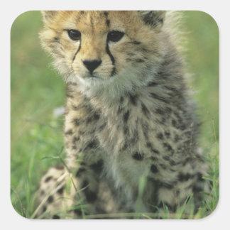 Cheetah Acinonyx jubatus Tanzania Serengeti Sticker
