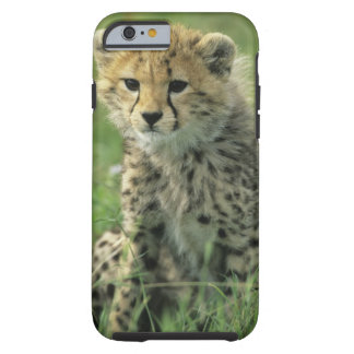 Cheetah, (Acinonyx jubatus), Tanzania, Serengeti Tough iPhone 6 Case