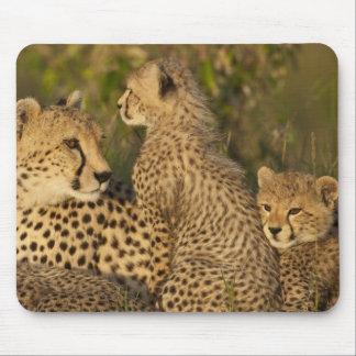 Cheetah Acinonyx jubatus Upper Mara Masai Mousepads
