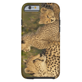 Cheetah, Acinonyx jubatus, Upper Mara, Masai Tough iPhone 6 Case