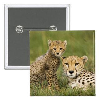 Cheetah, Acinonyx jubatus, with cub in the 15 Cm Square Badge