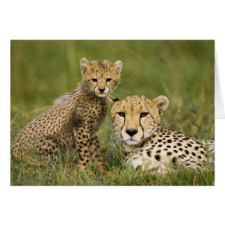 Cheetah, Acinonyx jubatus, with cub in the Card