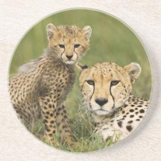 Cheetah, Acinonyx jubatus, with cub in the Coaster