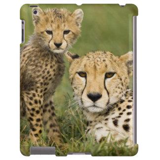 Cheetah, Acinonyx jubatus, with cub in the iPad Case